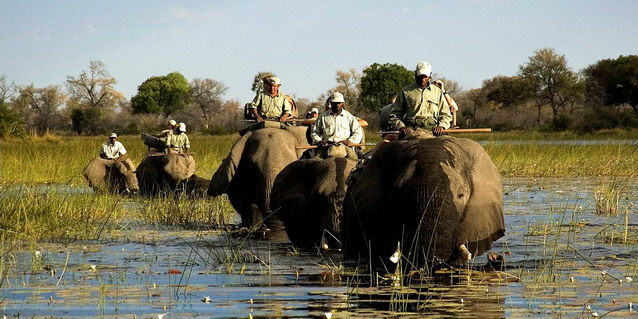 best southern africa safari experiences