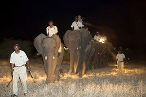 Image result for safari kruger night