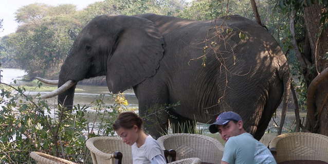 Elephant in Safari Camp - Best Luxury African Safaris in Southern Africa | Client Feedback | Classic Africa