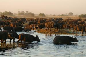 Luxury African Safaris - Great Wilderness Journey | Luxury African Safari Vacations | Classic Africa