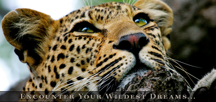 Classic Africa - Southern Africa Safaris - Luxury African Safaris
