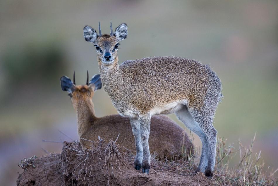 Pierre's November 2018 Safari - Luxury African Photo Safaris