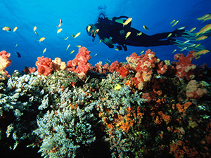 Scuba Diving in Southern Africa - Luxury Mozambique Vacations