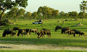 Luxury Botswana Safari - Okavango Delta Game Drive