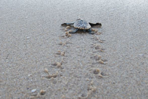Luxury South Africa Vacations - Turtles at Rocktail Beach Camp