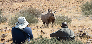 Luxury Namibia Safaris - Desert-Adapted Black Rhino at Desert Rhino Camp