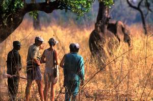 Walking Safaris in the South Luangwa National Park - Luxury Zambia Safaris