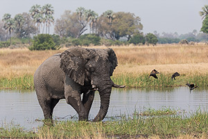 Quality Wildlife Photography - Lenses for Safari