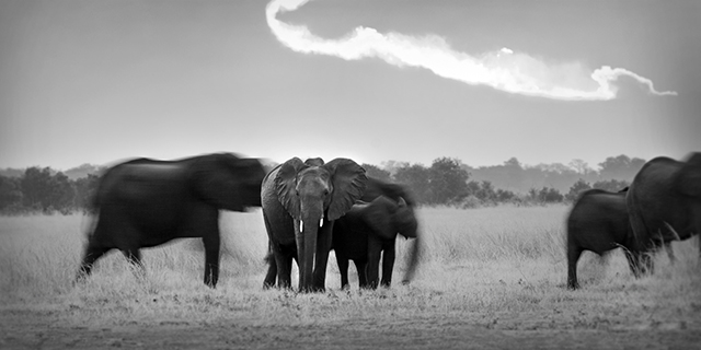 Elephants Crossing Hwange National Park - Frequently Asked Questions | Luxury African Safari Tours | Classic Africa