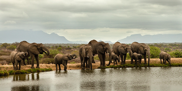 Elephant herd in the Kruger Park | Luxury African Safari Vacations | Classic Africa