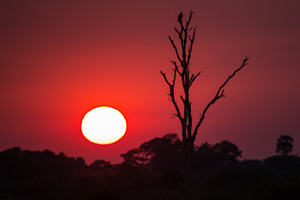 Okavango Sunset - Luxury Botswana Safaris