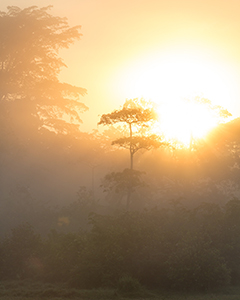 Rainforest Photography Conditions - Luxury Odzala Safaris