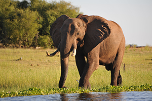 Elephants at Changa Safari Camp - Luxury Zimbabwe Safaris
