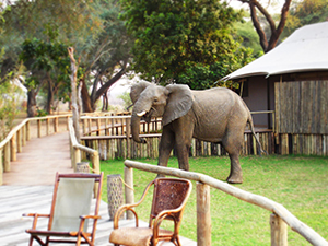 Anabezi Camp Visitor - Luxury Lower Zambezi Safaris