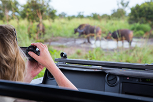 Photographing from the Safari Vehicle - Luxury Southern African Safaris