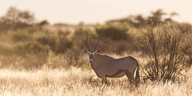 Oryx in the Southern Kalahari Desert | Luxury African Safari Vacations | Classic Africa