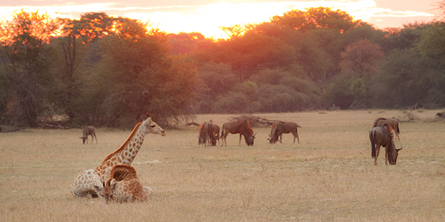 Sunrise on the Plains - Safari Seasons | Luxury African Safari Vacations | Classic Africa