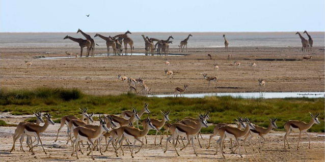Wildlife on Etosha Pan - Late Dry Season (Late September through Mid-November) | Luxury African Safari Vacations | Classic Africa