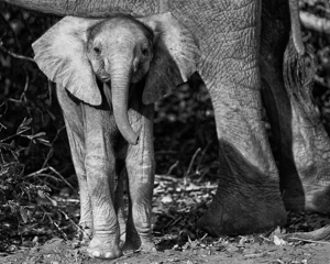Elephant Photography in Southern Africa - Luxury African Safaris