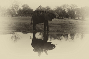 Black and White Photography Techniques - Luxury Southern African Safaris