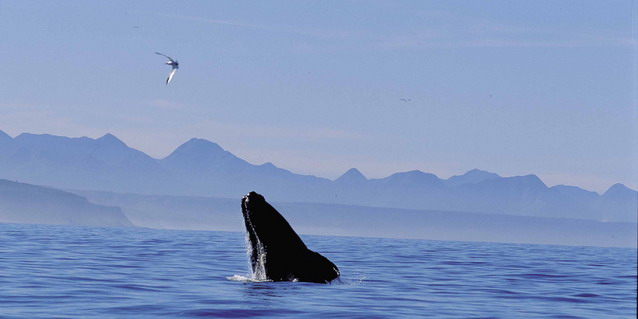 Whale Coast, South Africa - Marine Life | Southern African Safaris | Classic Africa