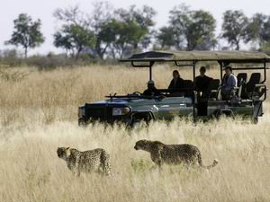 selinda camp luxury safari