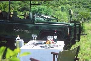 madikwe hills lodge madikwe reserve luxury safari