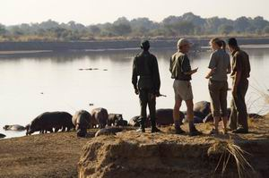 nkwali camp zambia luxury safaris